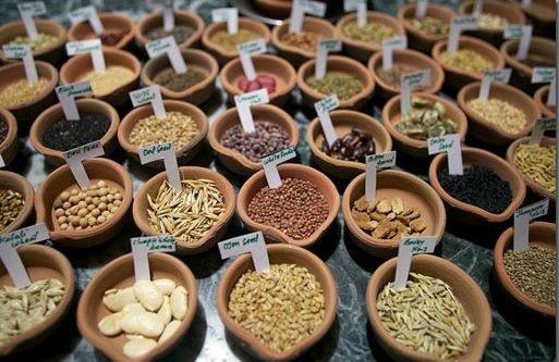 50 درصد بذرهای استفاده شده در خراسان شمالی اصلاح شده هستند,