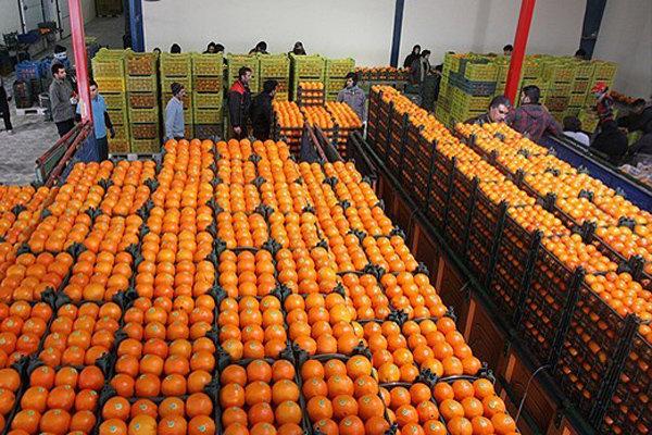توزیع 600 تن میوه شب عید در خراسان شمالی آغاز شد,