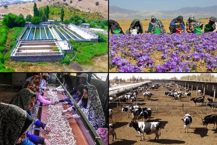صرف تسهیلات اشتغال روستایی بر حفظ دامداری سنتی استان/473 میلیارد تومان هزینه نیز نرخ بیکاری استان را تغییر نداد,