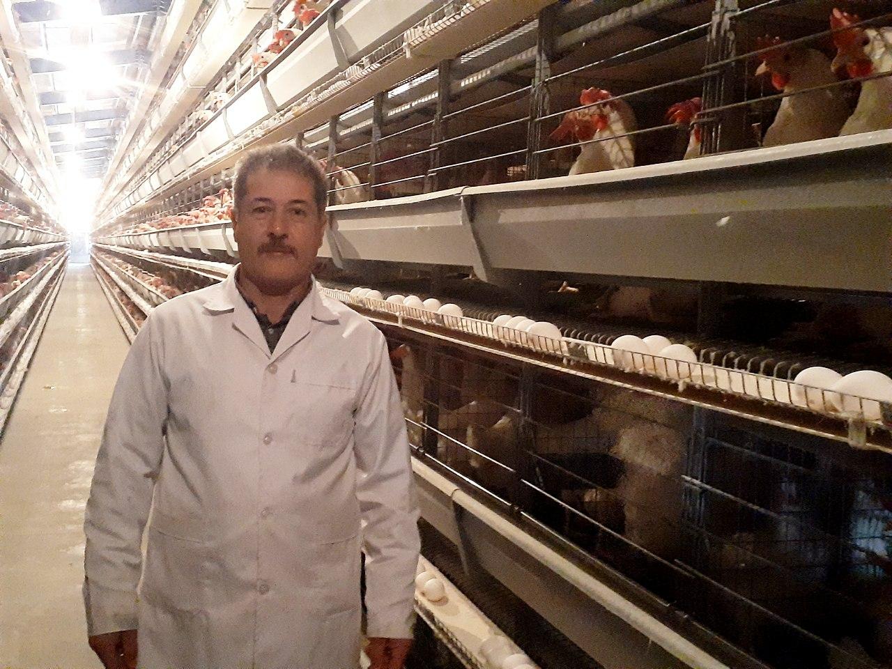 حال و روز ناخوش واحد مرغ تخمگذار فاروج/ مشکلات پیگیری می شود,