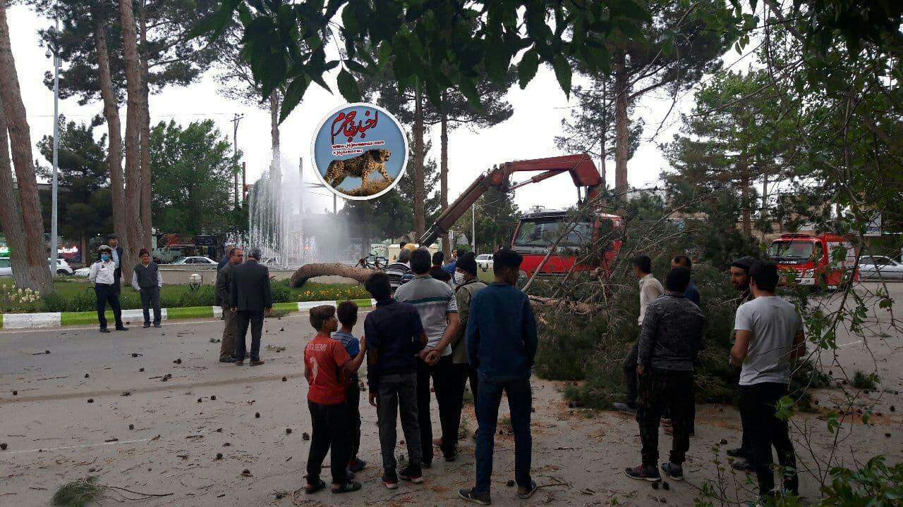 افتادن درختان کاج بر اثر وزش باد در جاجرم