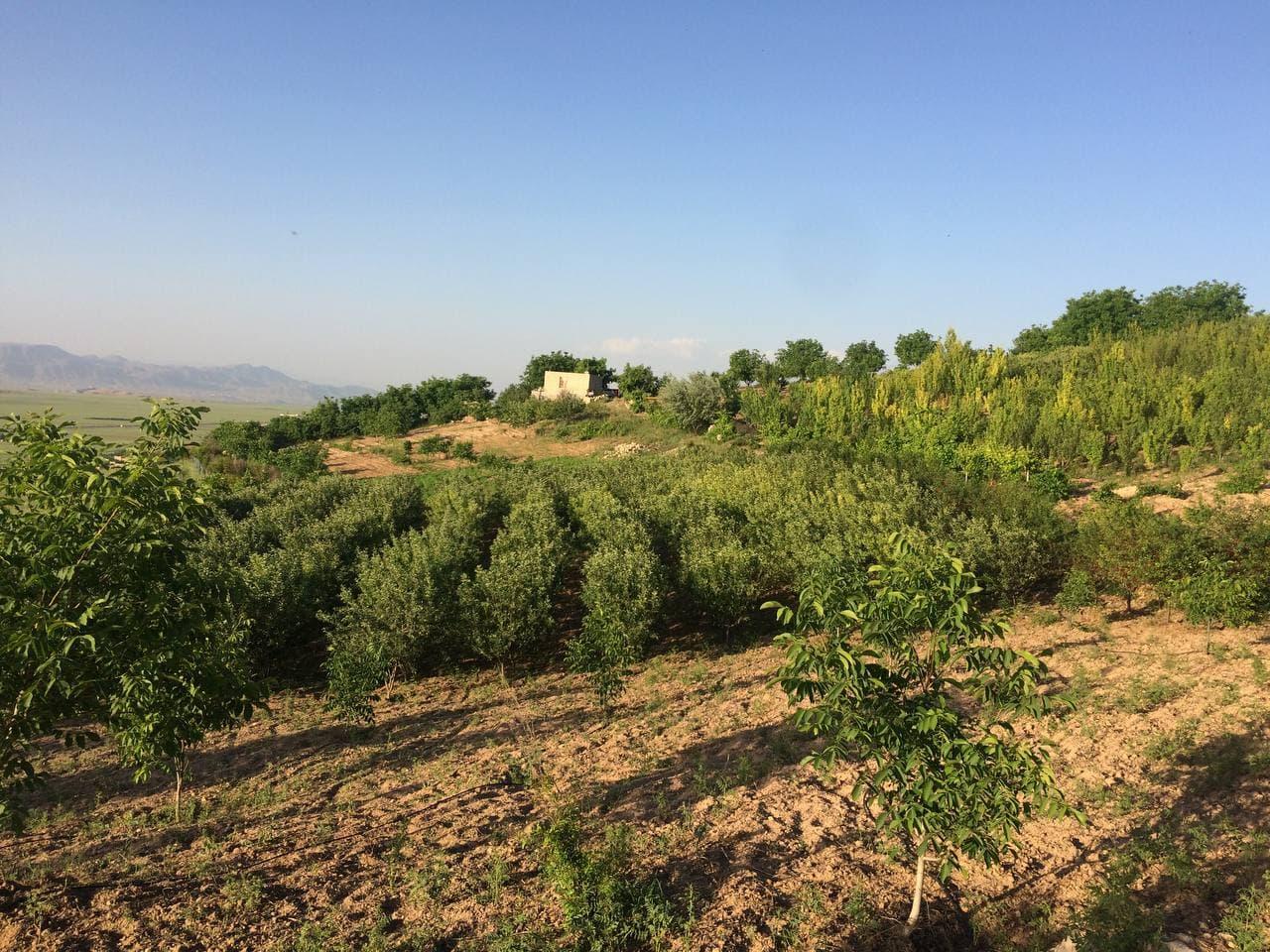 کارآفرینی از کشت گیاهان دارویی تا پرورش زنبور عسل ,خراسان شمالی+بجنورد+آزادگان+مانه و سملقان+باغدار+زنبوردار
