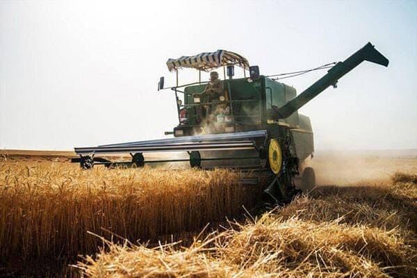 کاهش ۵۰ درصدی تولید گندم در جاجرم به علت خشکسالی/ آغاز برداشت غلات در جاجرم,