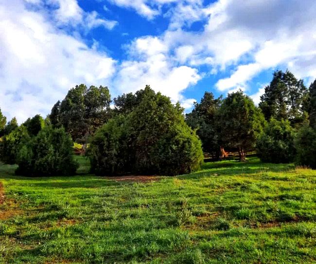 طبیعت بی نظیر و زیبای روستای پالکانلو|2841003