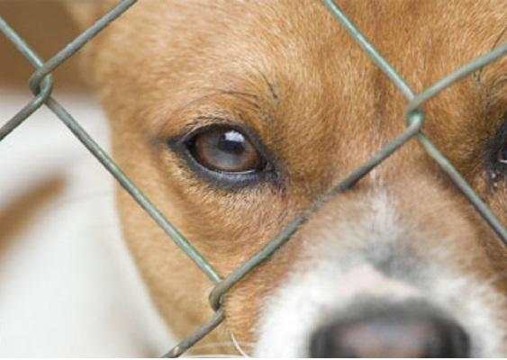 ساماندهی سگ های ولگرد بدون پشتوانه مالی/ حامیانی که حمایت نمی شوند