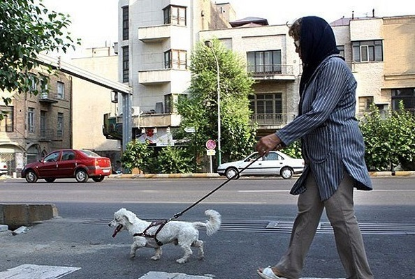 جابجایی سگ در معابر عمومی جرم و غیرقانونی است/غفلت مجلس از ورود به موضوع نگه داری سگ و سگ گردانی