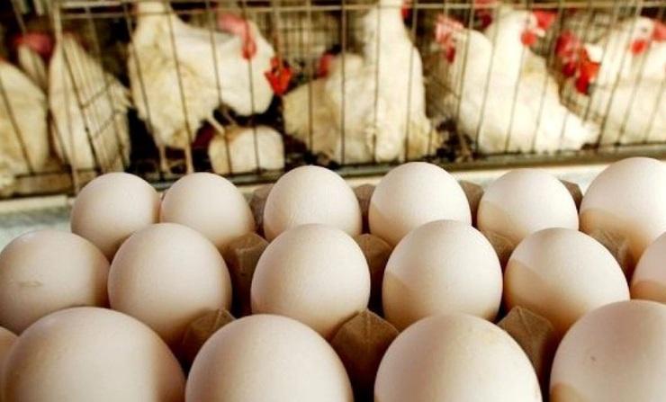 اجرایی نشدن قیمت مصوب مرغ وتخم مرغ در کشور، دامن خراسان شمالی را گرفت / سنگینی شانه های تخم مرغ روی دوش مردم