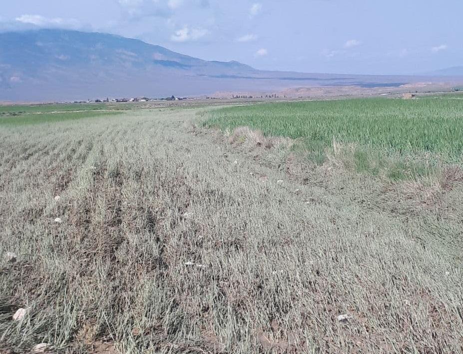 سیل 35 میلیارد ریال به کشاورزان و دامداران جاجرمی خسارت زد